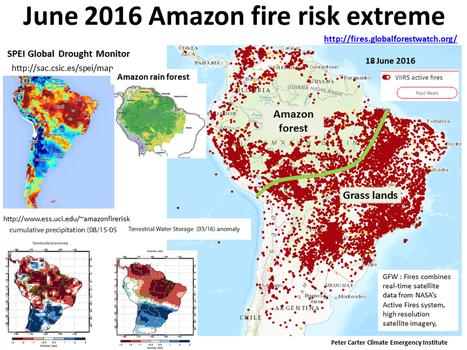 Amazon Rainforest Third Major Drought 11 Years | Ellabird Books | Rainforest EXPLORER:  News & Notes | Scoop.it
