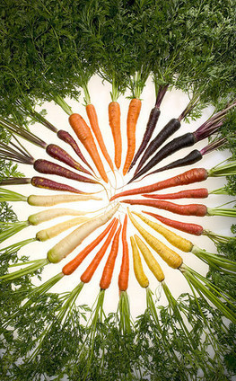 USDA Blog » USDA Scientists Take an Organic Approach to Improving Carrots | Plant-Microbe Symbiosis | Scoop.it