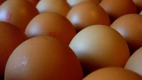 Manger des oeufs donne-t-il du cholestérol ? - Science et vie | Nature et Vie | Scoop.it