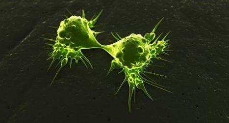 Un cazador de células cancerígenas para combatir la metástasis | BioN | Scoop.it
