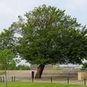 Quand les arbres sauvent des vies | Actus Bien-être - Santé | Scoop.it