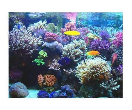 Riesgos ante la desaparición de arrecifes coralinos | Turismo costero y marítimo | Scoop.it