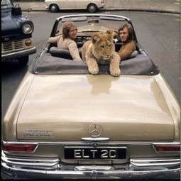The EFL SMARTblog: Christian – The Lion cub from Harrods | IELTS exam preparation | Scoop.it