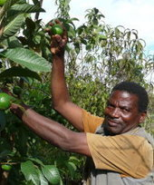 Agroforestry offers potential for greater food security in Africa - How we made it in Africa | Fairly Traded News | Scoop.it