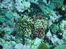 Corals and Climate Change | #SciFund | Scoop.it