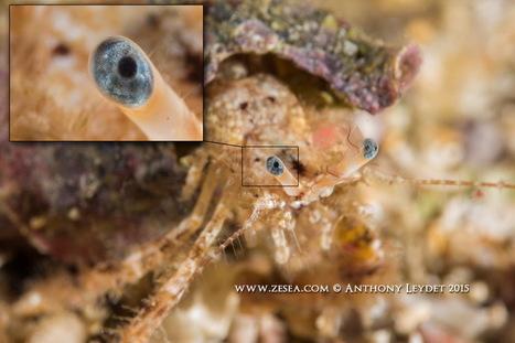 Lentille macro ATOM de Dyron - Le Blog de la Plongée Bio   photo sous-marine   Scoop.it