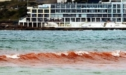 Australian beaches closed after turning blood red | Naturetime | Scoop.it
