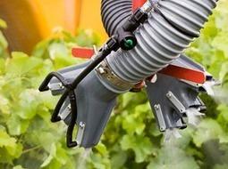 Protection des vignes : le point sur les résistances de mildiou ... - Vitisphere.com   Le vin quotidien   Scoop.it