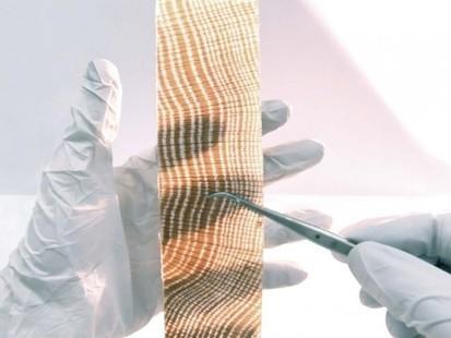 Le bois translucide : matériau du futur ? - Recherche & développement | CIR ET RECHERCHE  - LG | Scoop.it