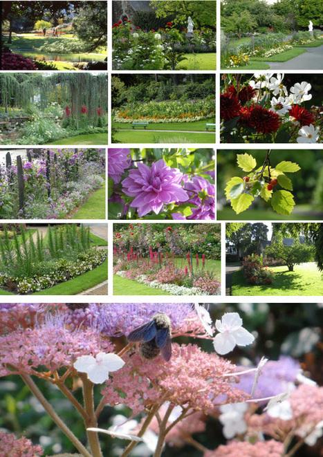 Jardin des plantes arbres p for Scopitone 2015 jardin des plantes