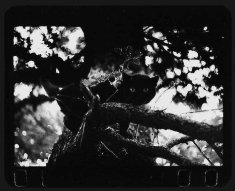 Giacomo Brunelli's Striking Black & White Animal Street Photography | True Photography | Scoop.it