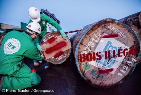 Bois illégal : les Pays-Bas enclenchent des poursuites judiciaires | Biodiversité | Scoop.it