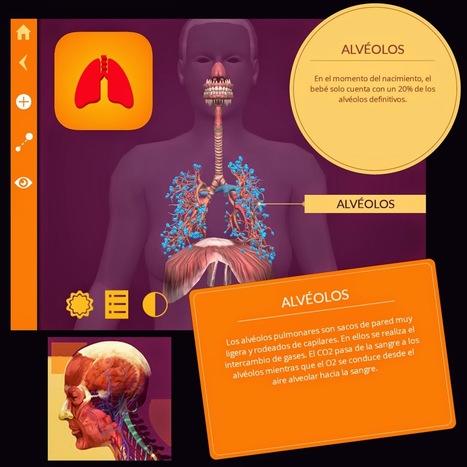 El cuerpo humano en Realidad Aumentada con Arloon Anatomy - PROYECTO #GUAPPIS | Ámbito Científico | Scoop.it