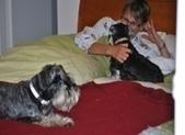 Home ,Dog Walking, Pet Sitting and Minding – Surry Hills, Inner West, Sydney | raleighwoodpetsitting | Scoop.it
