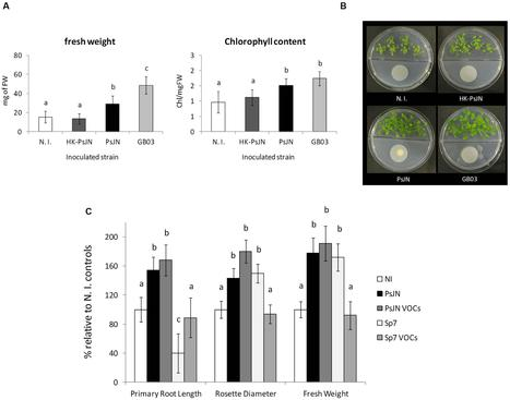 Frontiers | Volatile-Mediated Effects Predominate in Paraburkholderia phytofirmans Growth Promotion and Salt Stress Tolerance of Arabidopsis thaliana | Plant Biotic Interactions | Plant roots and rhizosphere | Scoop.it