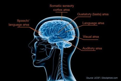 Breakthrough Study Reveals Biological Basis for Sensory Processing Disorders in Kids   ucsf.edu   Education Revolution   Scoop.it