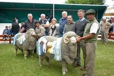 WA Merino genetics on show in Argentina - Stock & Land   Sheep and Wool   Scoop.it