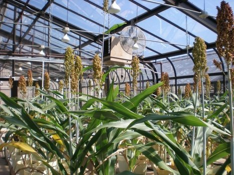 Feeding Crops, Feeding the World – Part 4: 2 More Ways to Improve Plant Nutrition | Agriculture news | Scoop.it