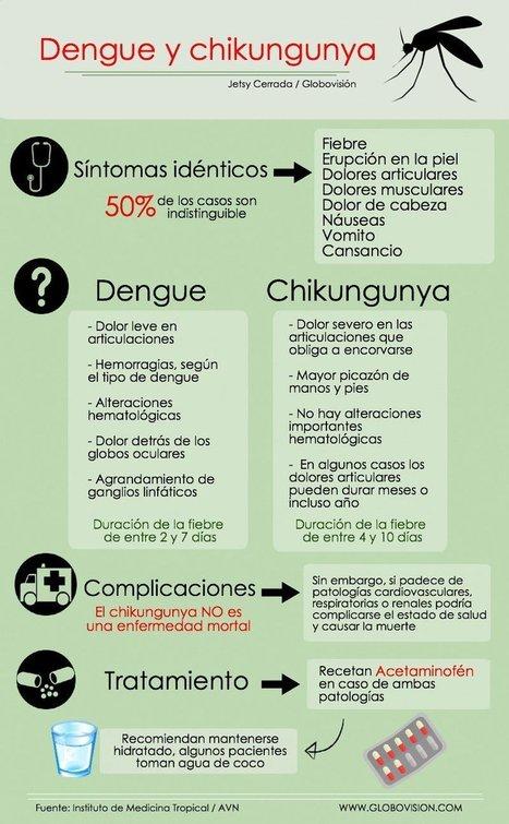 APRENDE A DIFERENCIAR ENTRE DENGUE Y CHIKUNGUNYA + VIDEO   Salud Publica   Scoop.it