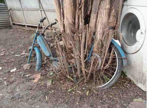 Le Bon Coin : quand l'arbre mange la mobylette - 24matins | Essai | Scoop.it