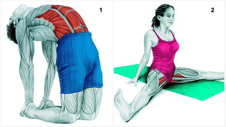 36 photos bien illustrées pour vous montrer quel muscle vous étirez ! | Un peu de tout et de rien ... | Scoop.it