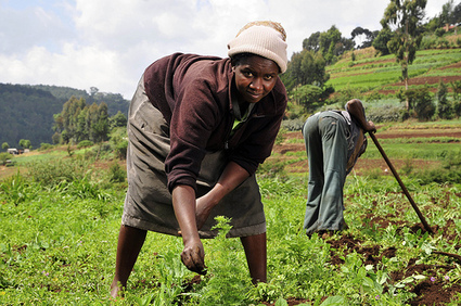 GM crops: African opposition is a farce, says group led by Kofi Annan | Questions de développement ... | Scoop.it