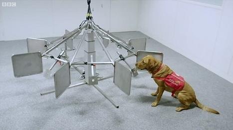 Οι σκύλοι εντοπίζουν τον καρκίνο | for better life... | Scoop.it