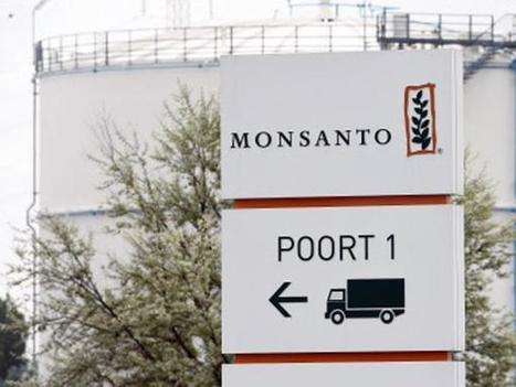 Monsanto earnings disappointment may help Bayer with its bid - The Economic Times | Grain du Coteau : News ( corn maize ethanol DDG soybean soymeal wheat livestock beef pigs canadian dollar) | Scoop.it