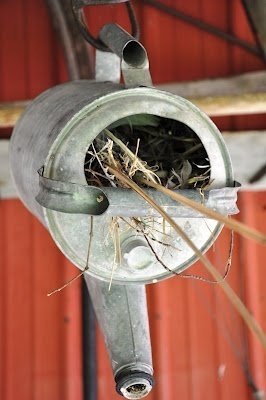 galvanized watering can birdhouse | Garden Ideas by Team Pendley | Scoop.it