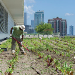 ULX: 10 Projects Incorporating Urban Agriculture  - Urban Land Magazine | Urban design tools | Scoop.it