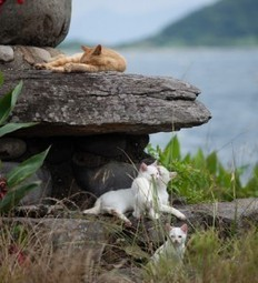 The Purrfect Island Home For Cats Where Even Buildings Are Cat Shaped Too | Catnip Daily | Scoop.it