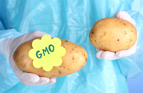 The GM safety dance: What's rule and what's real | GMO GM Articles Research Links | Scoop.it