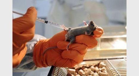 Le sucre peut être dangereusement toxique chez les souris | Un univers de possibles... | Scoop.it