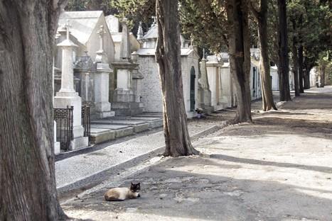 Os gatos ainda esperam por Mário Cesariny | Coffee Break Ezine | Scoop.it