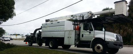 Tree Service Florida, Residential & Commercial Trees Management Services - Southern Arbor Services Inc. | SOUTHERN ARBOR SERVICES INC. | Scoop.it