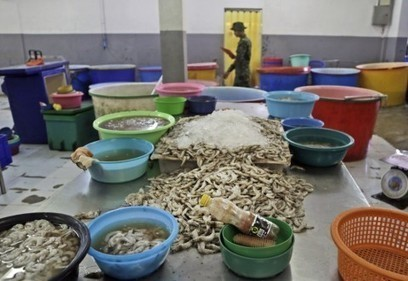 How to find shrimp that's not produced by slave labor in Thailand | Government for the People | Scoop.it