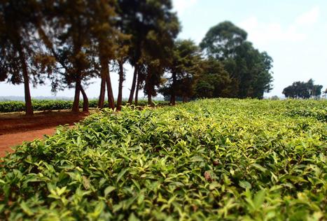 Cameroun : une agriculture en jachère | Questions de développement ... | Scoop.it