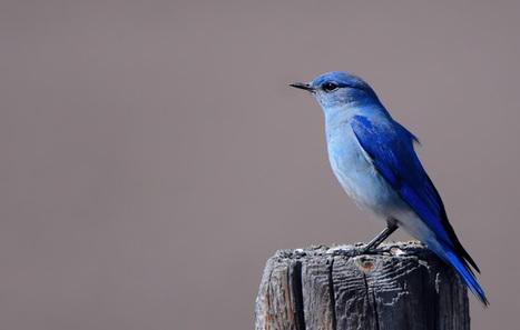 Twitter relève le défi de la photo | Actua web marketing | Scoop.it