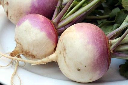El nabo en la gastronomía | El rábano (Raphanus sativus) y el nabo (Brassica rapa) | Scoop.it