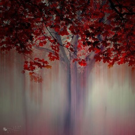Forrest Photography by Ildiko Neer « Cuded – Showcase of Art & Design | The Art of Photography | Scoop.it