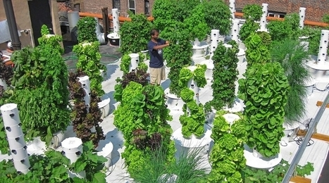Urban farming in your backyard? There's a vertical aeroponic garden for that | Vertical Farm - Food Factory | Scoop.it