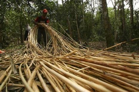 L'agriculture, une arme contre le réchauffement climatique | Questions de développement ... | Scoop.it