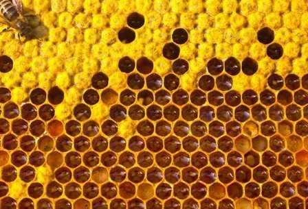 Honey bee colonies fall by nearly 12% globally | La recherche en apiculture | Scoop.it