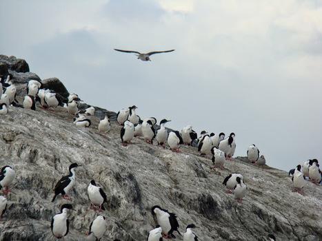 Merveilles naturelles de l´Argentine: Canal de Beagle à Ushuaia | Univers du Voyage | Scoop.it