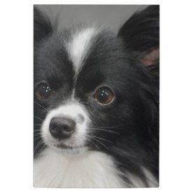 Post-It Klebezettel mit Hunde | kleckerlabor | Scoop.it