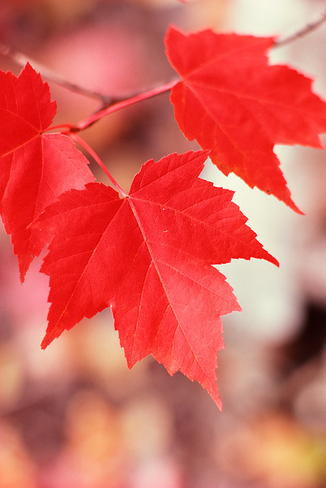 New England Foliage: Live Foliage Map & Scenic Drives | The Miracle of Fall | Scoop.it