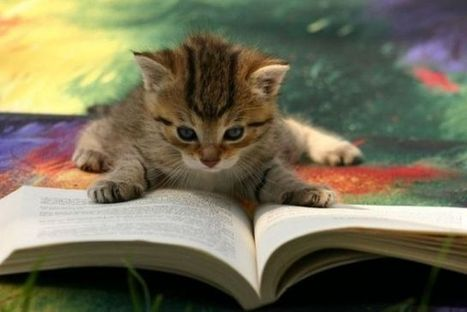 Caresser le minou en bibliothèque : une réalité | Baboué ? | Scoop.it