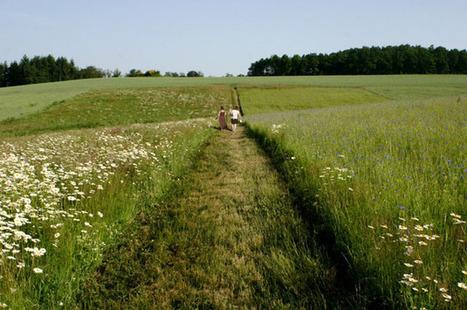 Openfield – revue ouverte sur le paysage » La révolution urbaine | Le Petit Jardinier Urbain | Scoop.it