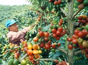 Colombia recupera el cuarto lugar en producción de café - Portafolio.co | Café | Scoop.it