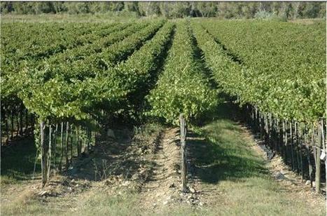 Les leviers possibles pour limiter les effets du réchauffement climatique | Le vin quotidien | Scoop.it